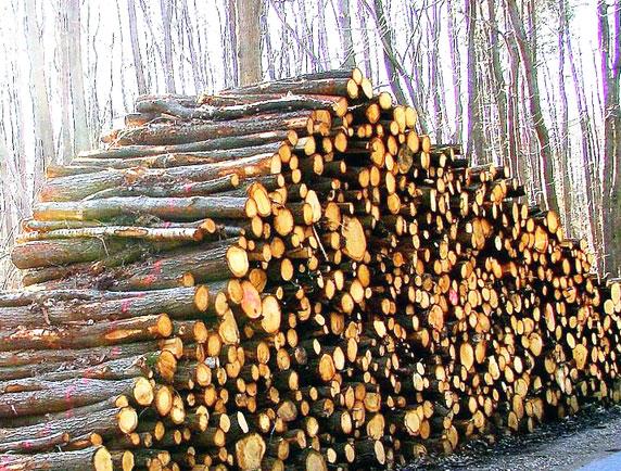 Bois de chauffage sec nb bois - Comment savoir si le bois de chauffage est sec ...