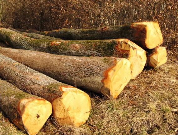 Le Bon Coin Bois De Chauffage Landes - bois de chauffage sec NB BOIS